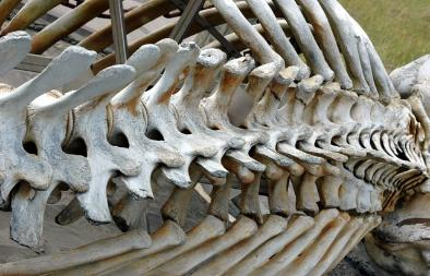 Whale Spine, Long Beach, WA